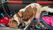 Drugshond vindt cannabis in onderbroek