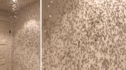 Man laat licht per ongeluk branden en vindt dan duizenden insecten in zijn badkamer