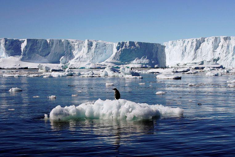 Een pinguïn op een ijsschots op Antarctica. Beeld REUTERS