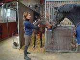 Jolanda Bevelander uit Brouwershaven: een leven zonder paarden is ondenkbaar