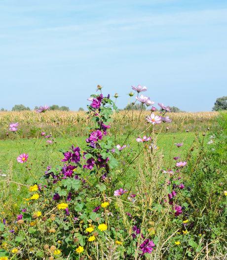 Gelderland geeft 6 miljoen voor landbouw met meer oog voor de natuur