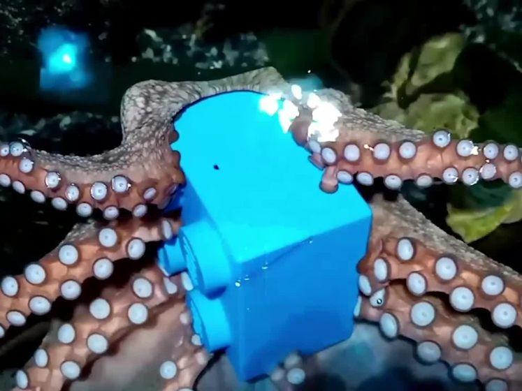 Octopus wordt verwend met cadeau