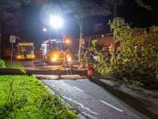 Stormschade: omgewaaide boom in IJsselstein zorgt voor stilvallen busverkeer