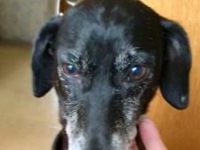 Vermiste hond zwierf kilometers door Achterhoek: 'Nog nooit meegemaakt'