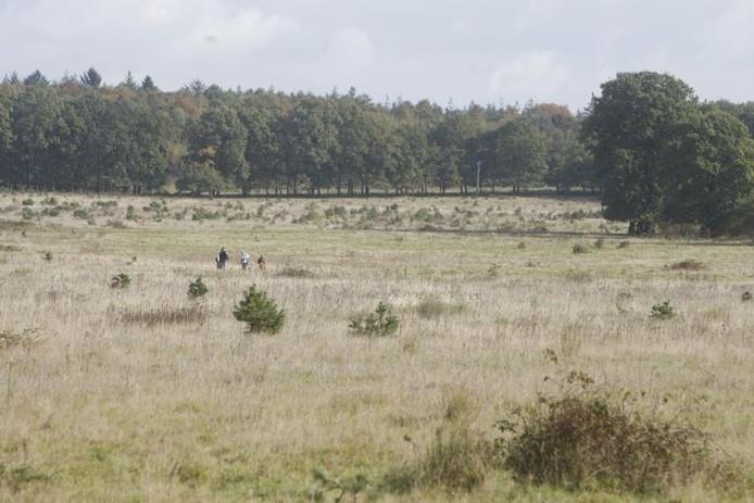 Een paar wandelaars in het open veld aan de rand van het Nationaal Park Utrechtse Heuvelrug.