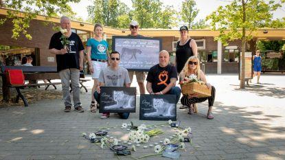 Stille wake aan Planckendael voor doodgeschoten leeuwin