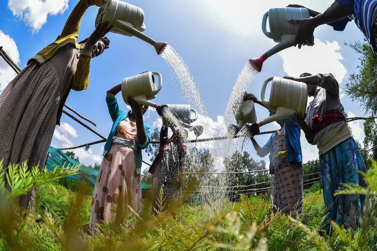 Handwerk op een kwekerij in Zuid-Ethiopië. Beeld Hollandse Hoogte / AFP