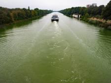 'Extreem veel blauwalg' kleurt Maas-Waalkanaal groen
