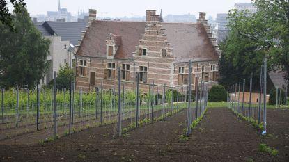 Oude traditie in ere hersteld: voor het eerst sinds eind 17de eeuw opnieuw een wijngaard aan De Wijnpers