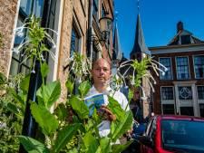 Met wereldberoemde Pothoofdplant en  stadsgroen hoort Deventer bij Hollandse en Vlaamse topsteden: 'Onkruid? Bestaat niet!