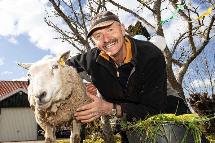 Is Schaap met de naam Oma (18) het oudste schaap van Nederland? Hobby boer Cock Verleun denkt van wel.