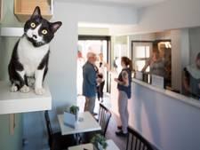 Kattencafé in Goes geopend