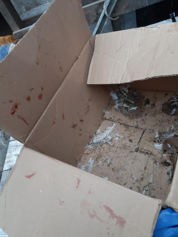 De dieren werden gevonden in een met bloed besmeurde doos.