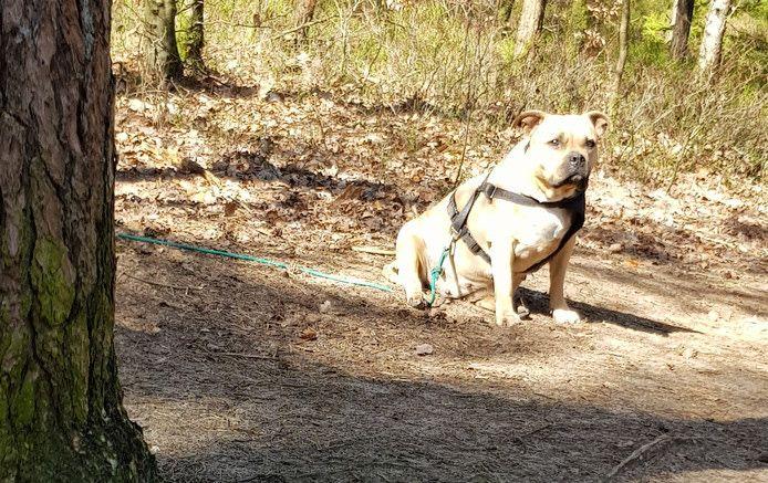 Wandelaars troffen maandag een vastgebonden hond aan bij de Loenense waterval.
