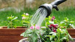 Emmer in de douche, gras niet te kort maaien,... : expert vertelt hoe je zelf spaarzamer om kan gaan met water