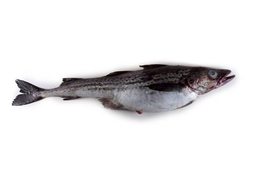 Alaskakoolvis of pollak.
