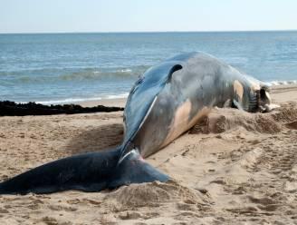 Dode walvis met maag vol plastic aangetroffen op Sicilië