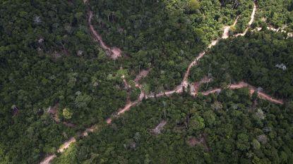 Leegkap regenwouden: Maya's gaven duizenden jaren geleden al het slechte voorbeeld