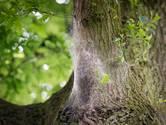 Bezoekers Best Kept Secret in Hilvarenbeek geplaagd door eikenprocessierups