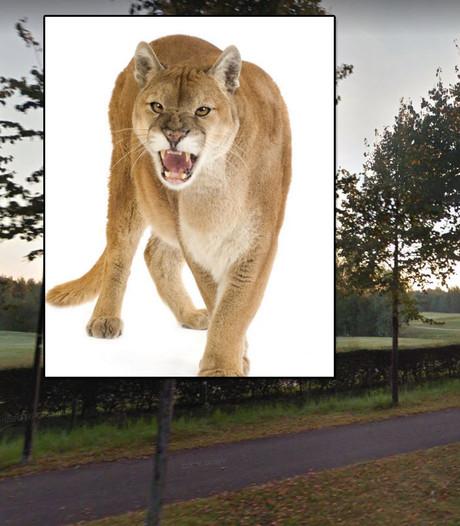 Politie jaagt op poema in Den Bosch, maar vindt alleen een flinke kat