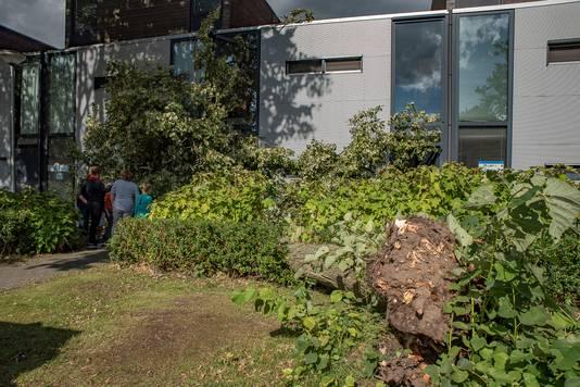 De boom belandde in zijn val tegen twee woonhuizen. De brandweer moest er aan te pas komen om de voordeur en gevel weer vrij te maken. Er raakten geen mensen gewond.