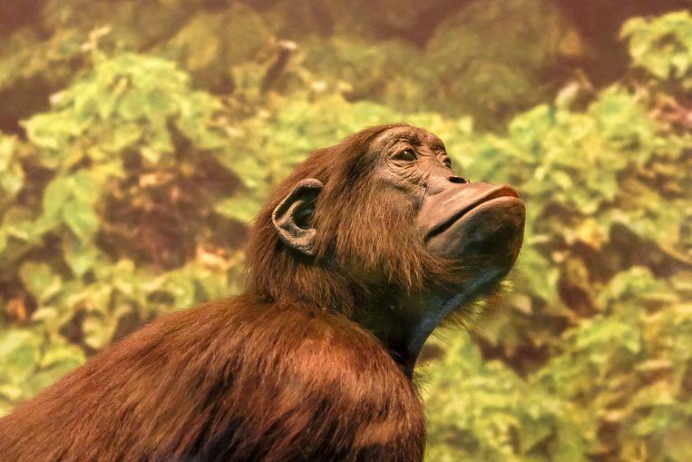 Opening Afrika Museum: Een reis naar het regenwoud.