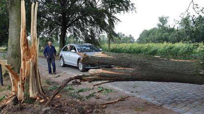 Bomen vallen op wegen en auto's: één gewonde