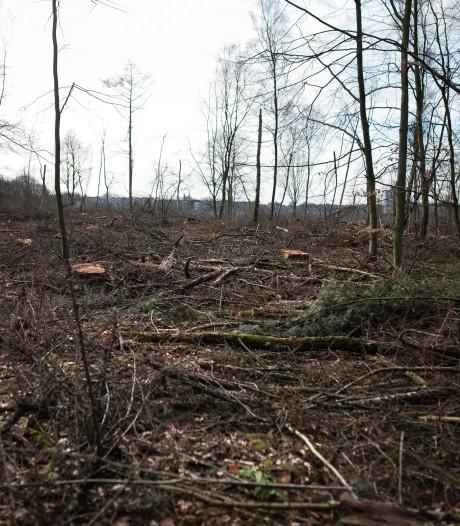 Bos bij Rhenen ziet er even niet uit