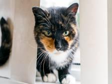 Kattenopvang De Kattenmand opent deuren opnieuw