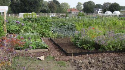 Groen licht voor zelfoogstboerderij op de Hoezekouter