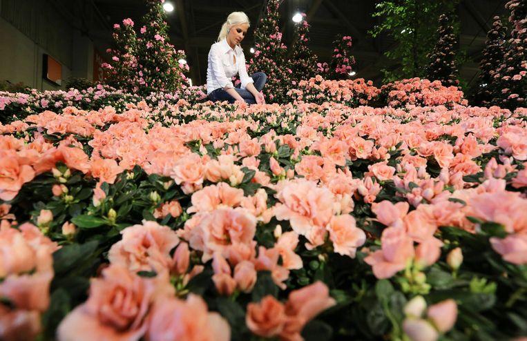 Een bloemstyliste legt de laatste hand aan een creatie voor een expositie in de Brabanthallen, in 2014. Beeld ANP