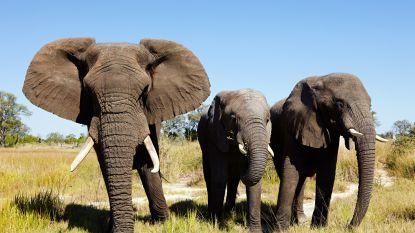 Botswana wil jacht op wilde dieren heropenen