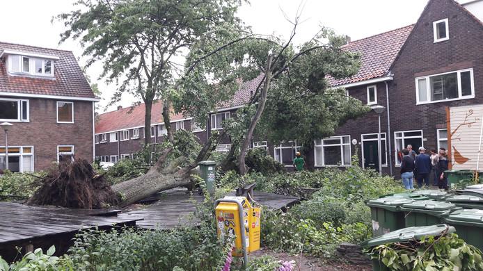De hele buurt hielp woensdagmorgen al mee om de buurtlinde in de Iriswijk in Eindhoven op te ruimen.