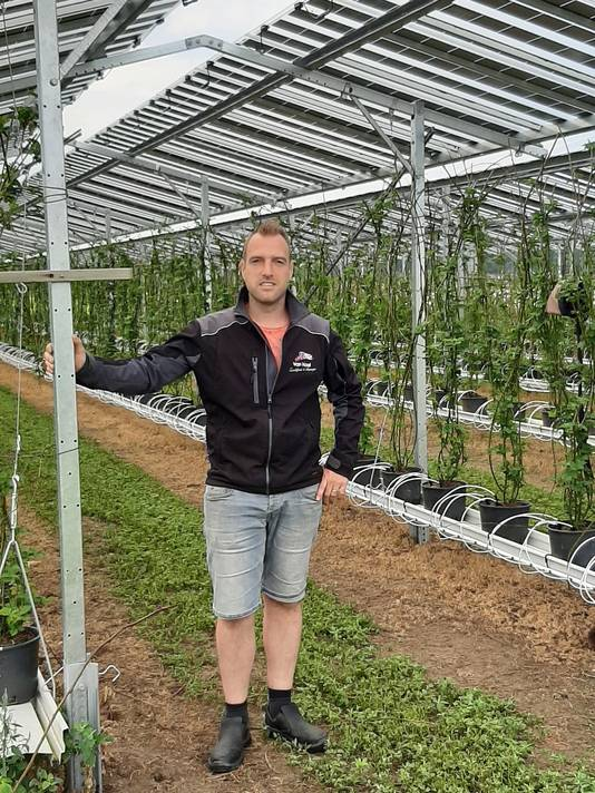 Maarten van Hoof uit Olland bij zijn bramen die onder de nieuwe zonnepanelen staan.