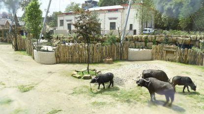 Vernieuwing Zoo werpt vruchten af