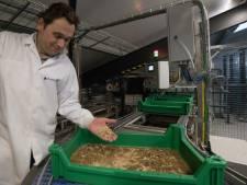Protifarm in Ermelo: insecten worden onmisbaar in onze voedselvoorziening