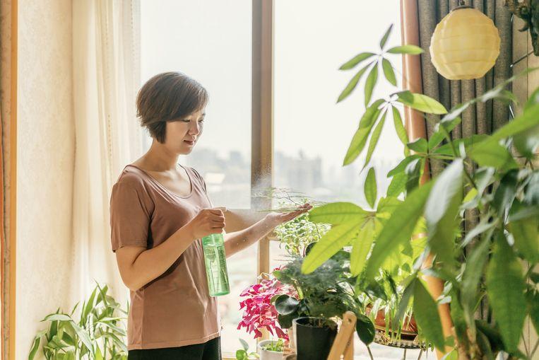 Airco in huis kan je kamerplanten doen wegkwijnen. Gelukkig los je dat op met twee simpele ingrepen.
