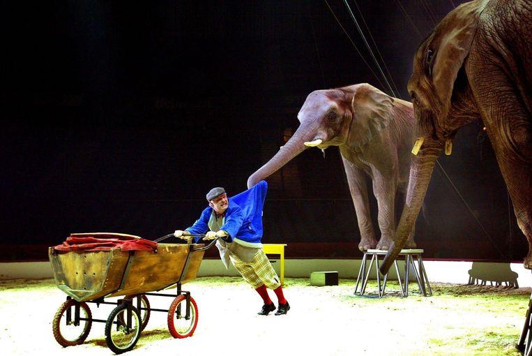 De Duitser Wendel Huber jongleert met een van zijn olifanten. Beeld anp