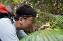 Ontdekker Lim spotte het slakje op planten langs een rivier op Borneo.