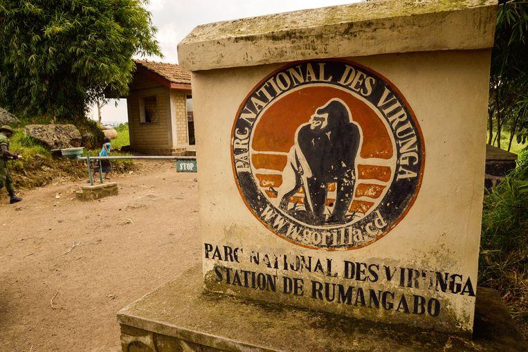 Een vijfde van de volledige oppervlakte van het Virungapark, waar een kwart van de nog levens berggorilla's zich huisvesten, wordt vrijgegeven voor boringen.