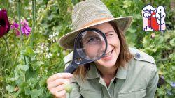 Safari tussen de struiken: spot jij deze 10 kleine beestjes in je tuin?