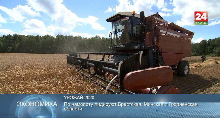 Ondertussen doet de Belarussische staatstelevisie verslag van de graanoogst. Beeld Tom Vennink