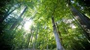 Dieven proberen met bomen van 200 jaar oud aan de haal te gaan