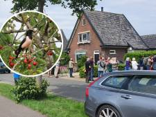 Tuin van Arjen in Hall is plotseling bedevaartsoord voor vogelspotters: kijk, daar zit de roze spreeuw!