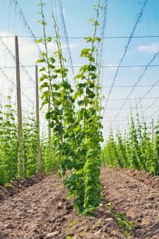 Bierbrouwer laat gedetineerden werken