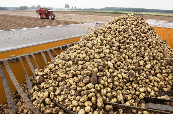 Pootaardappelen (het bedrijf waar deze foto is gemaakt, heeft niet met de fraude van doen, red.)