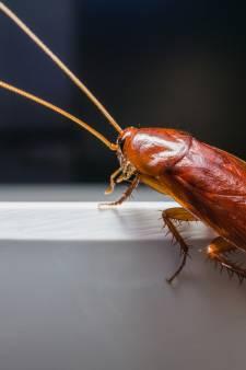 Chinese werknemers moeten voor straf urine drinken en kakkerlakken eten