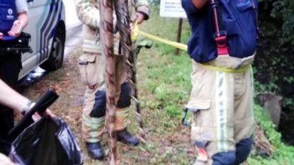 Brandweer vist dode slang uit Antitankgracht