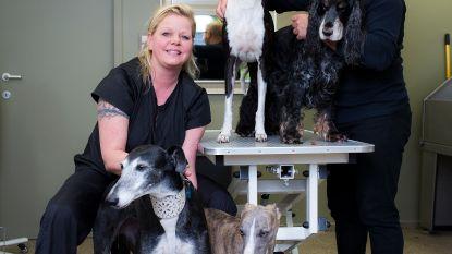 """""""Protheses voor hond kostten € 3.400"""""""