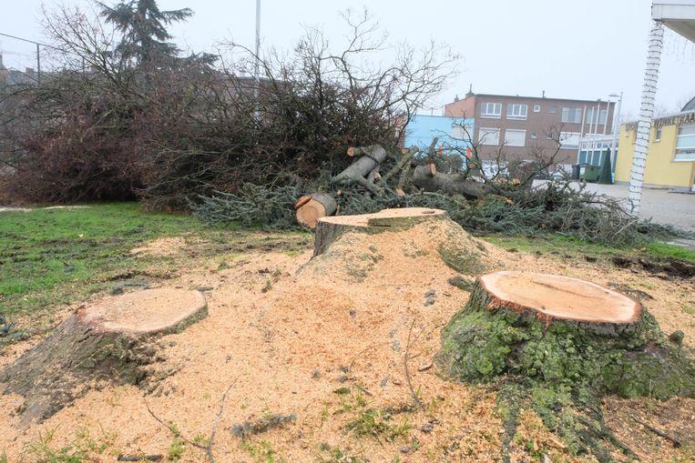 De kap van bomen nabij sporthal Winketkaai zorgde eind vorig jaar voor commotie.